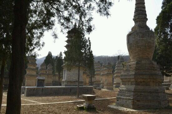 Pagoda Forest of Shaolin Temple:                   塔林