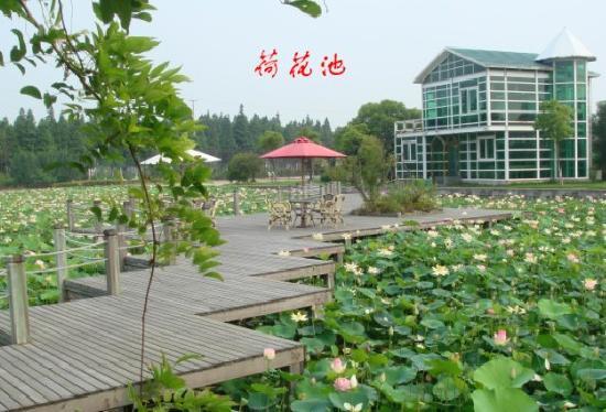 Shanghai Angle Bay Vacation Land: 荷花池