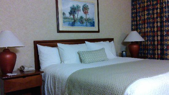 Embassy Suites by Hilton Tampa-USF/Near Busch Gardens: da chuang fang
