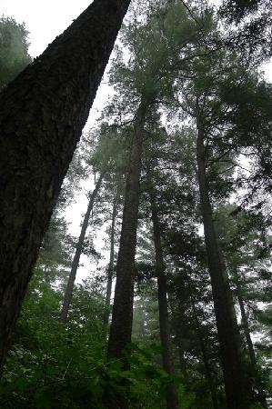 Wuying Forest Park:                   真的没有见过这么挺拔的红松。