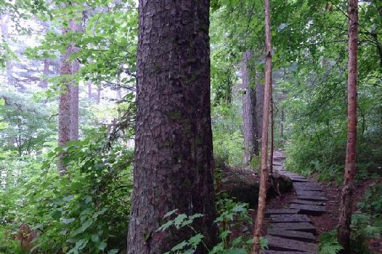 Wuying Forest Park:                   静谧的山中小路,真担心红松后面会突然跑出一只大狗熊来。