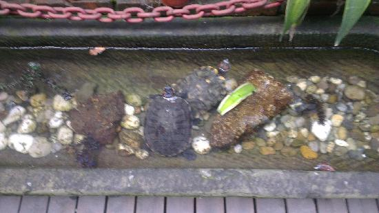 Shanghai SOHO International Youth Hostel:                                     龟龟