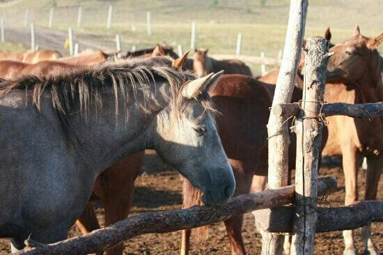 Bashang Hongshanjun Horse track: 军马场