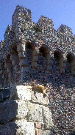 Castello di Amorosa: castle and cat