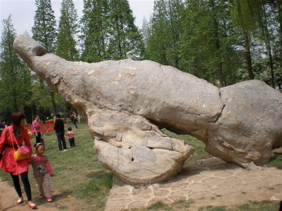 Qicheng Ruins: 戚城遗址内
