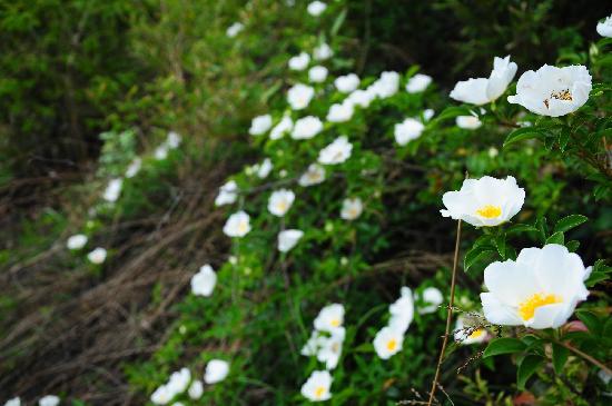 Baima Jian Longchi Scenic Spot: 山上的野花