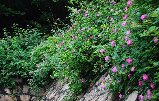 Baima Jian Longchi Scenic Spot: 野花