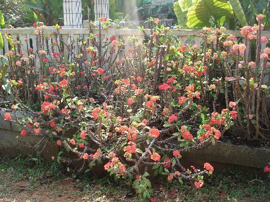 Tropical Flower Garden : 热带花