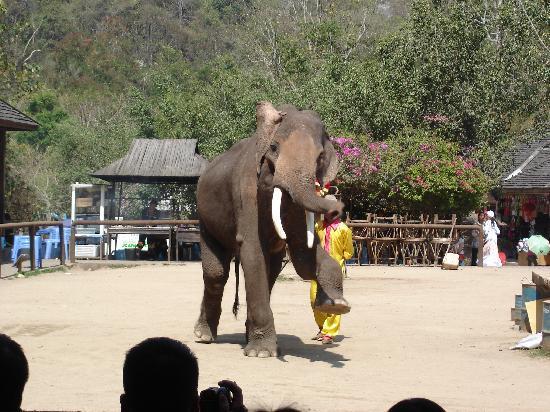 Gajah Liar Valley : 象