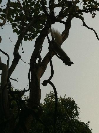 Baan Hanibah: 吃早饭的时候有松鼠拜访