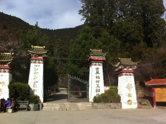Giant Cypress Nature Reserve of Bajie, Nyingchi: 柏树王