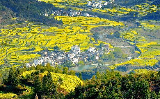Jiangling Terrace Scenic Resort : 江岭梯田风光