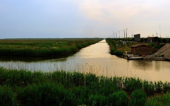 Chongming Dongtan Natural Reservation: 崇明东滩自然保护区