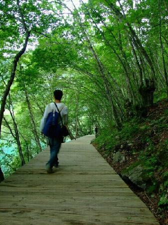 Zaru Horse Road : 森林里