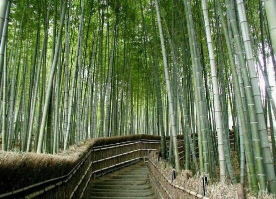 Yongdeng County, China: 兰州竹林沟