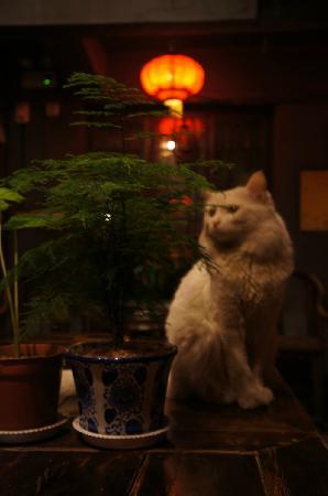 Shuyuan Youth Hostel: 青旅的猫