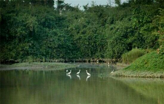 Bird Paradise : 天堂