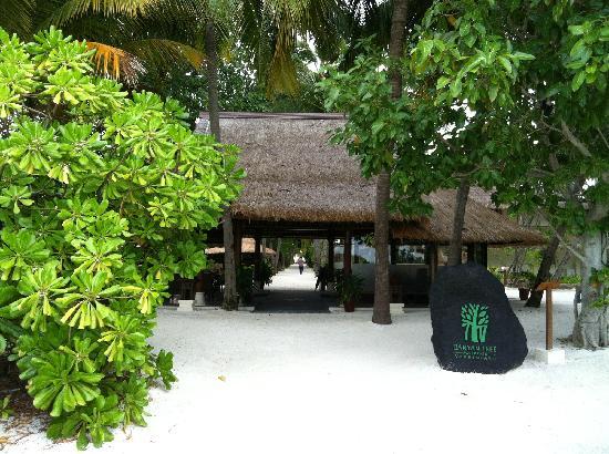 Banyan Tree Vabbinfaru: logo