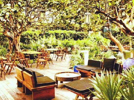 W South Beach: 酒店的树林