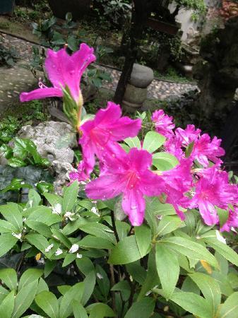 Liuyinlu Hostel: 客栈的花儿