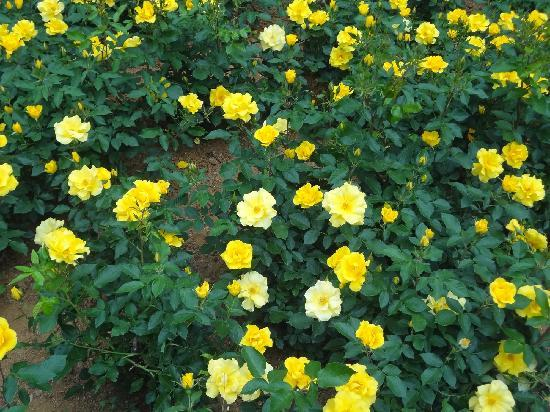 Yantai Da Nanshan Park: yellow
