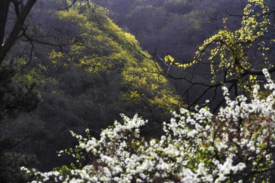 Swallow Hill Forest Park: yanzishan