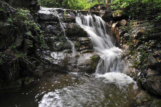Swallow Hill Forest Park: bai shou xia