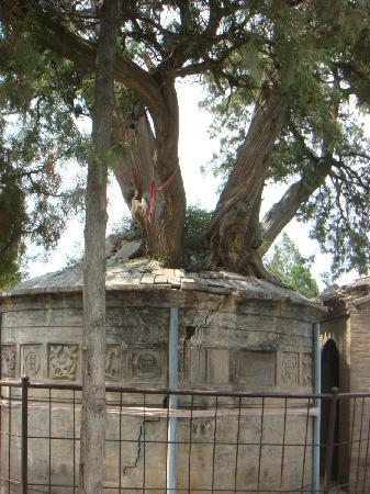 "Sima Qian Ancestral Hall: 司马迁坟头的""五子登科树"""