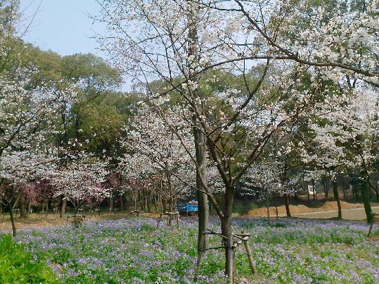 Mo Hill : flower