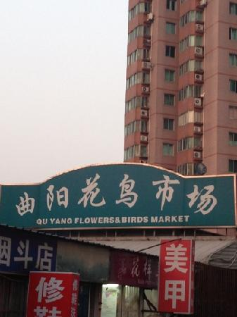 Quyang bird and flower Market