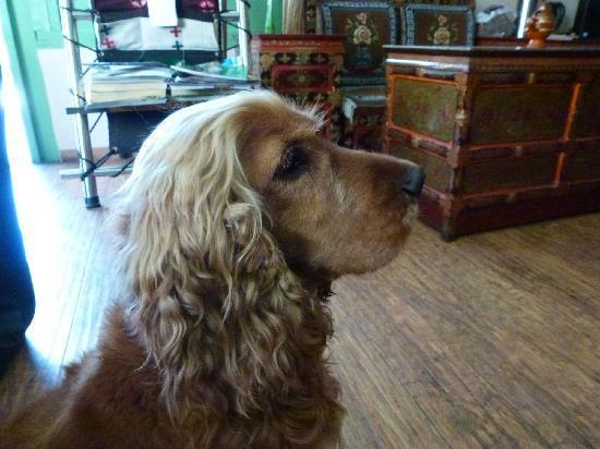 Banak Shol Hotel: 可爱的狗狗——咕噜,我就是只顾逗咕噜玩,才丢了手机。