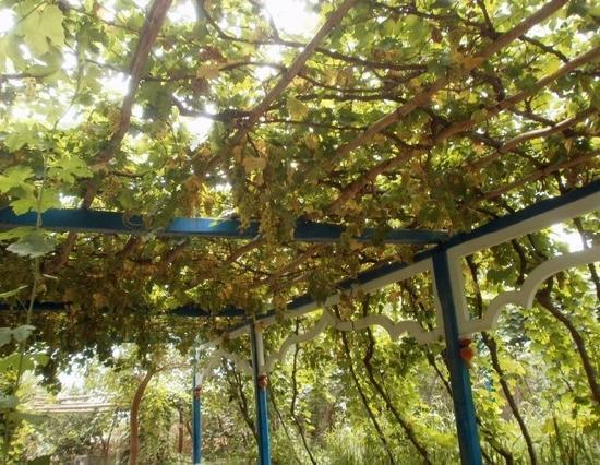 Grape Valley: 照片