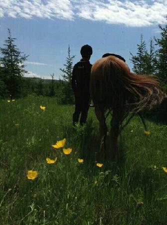 Bashang Hongshanjun Horse track: 野花