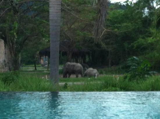 Mara River Safari Lodge : 可以看到犀牛河马的泳池