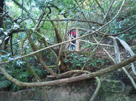 Jiaoling County, China: 剪不断,理还乱的树丛
