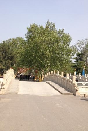 Kaifeng Iron Tower Park : 铁塔公园内的林荫道