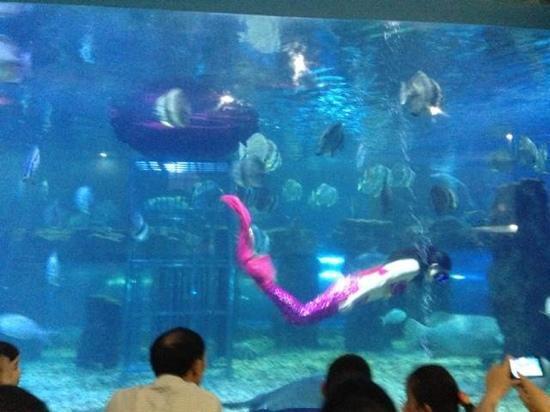 Taizhou Sea World : 台州海洋世界