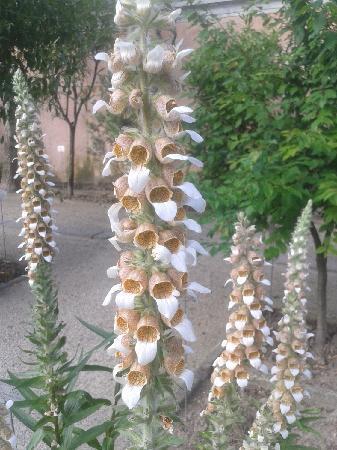 Orto Botanico di Padova: 串串香 ^_^
