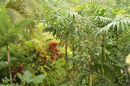 Bidadari Private Villas & Retreat: view