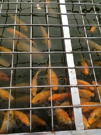 Wanpingkou Seaside Square: 万平口广场的鱼