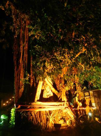 Phi Phi Banyan Villa: 01