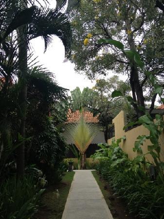 Villa de daun: 叶子典型的植物