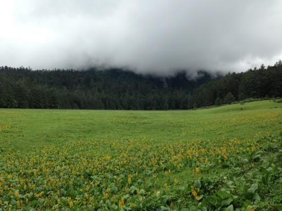 Spruce Plateau (Yunshan Ping) : 花海