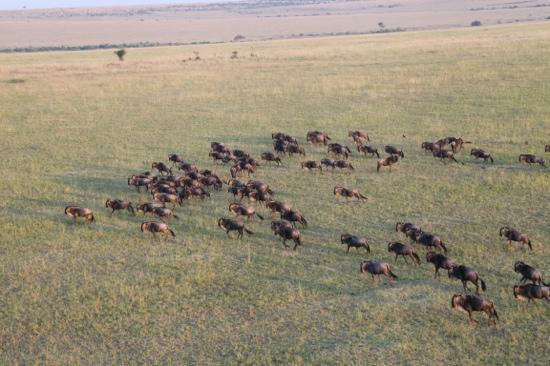 Pounds East Africa Safaris - Balloon Safari : balloon