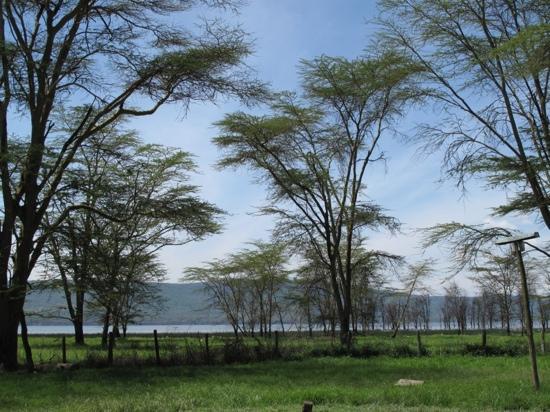 Karura Forest: forest