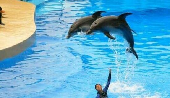 Qingdao Haitun Show Hall: 漂亮的海豚