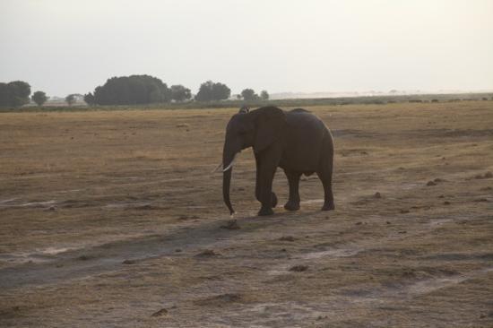 Sipi Safaris - Private Day Tours: sipi