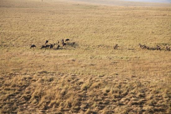 Namib Sky Balloon Safaris: balloon