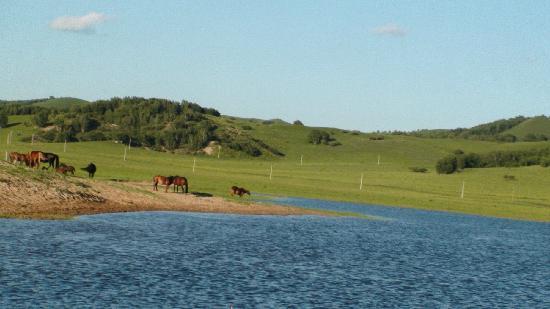 Xilinguole Grassland Nature Reserve : mei jing
