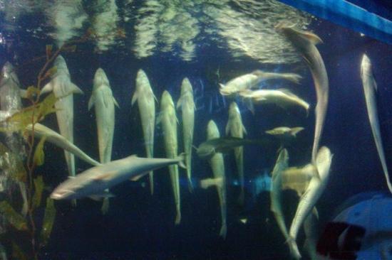 Fujian Rare Species of Marine Nature Reserve: 海洋博物馆